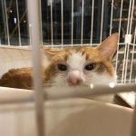 幕張本郷3丁目の迷子猫(保護猫)